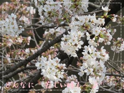 b0254145_00401980.jpg