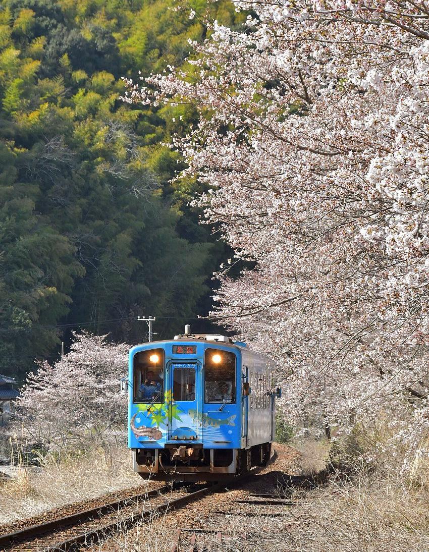 錦川鉄道の春_a0251146_23130680.jpg