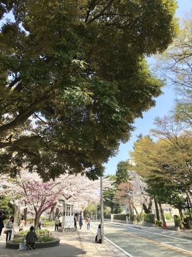 春爛漫・横浜山手デート_b0307951_22595413.jpg