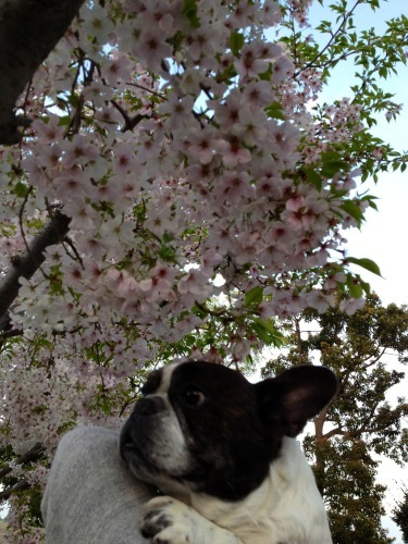 春爛漫・横浜山手デート_b0307951_23451546.jpg