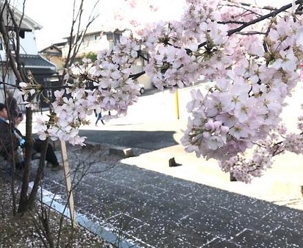 北野をどりのお客様・涼しげな道中着や綺麗なレースの日傘。_f0181251_17112134.jpg