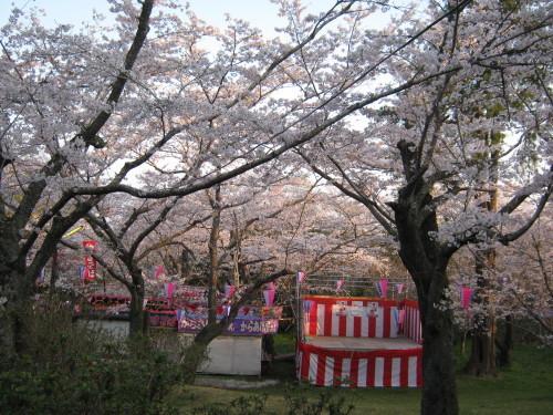 鶴舞公園の桜の開花状況(平成30年3月28日)_c0363752_10413118.jpg