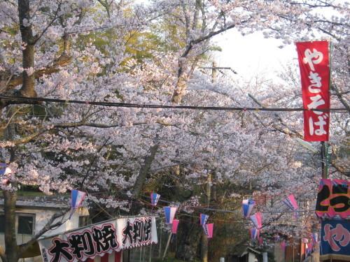 鶴舞公園の桜の開花状況(平成30年3月28日)_c0363752_10415398.jpg