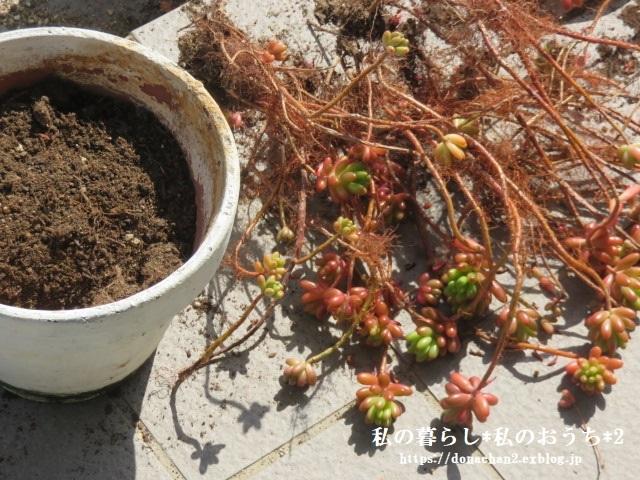 ++ウッドデッキテラス*&多肉植物*++_e0354456_21234841.jpg