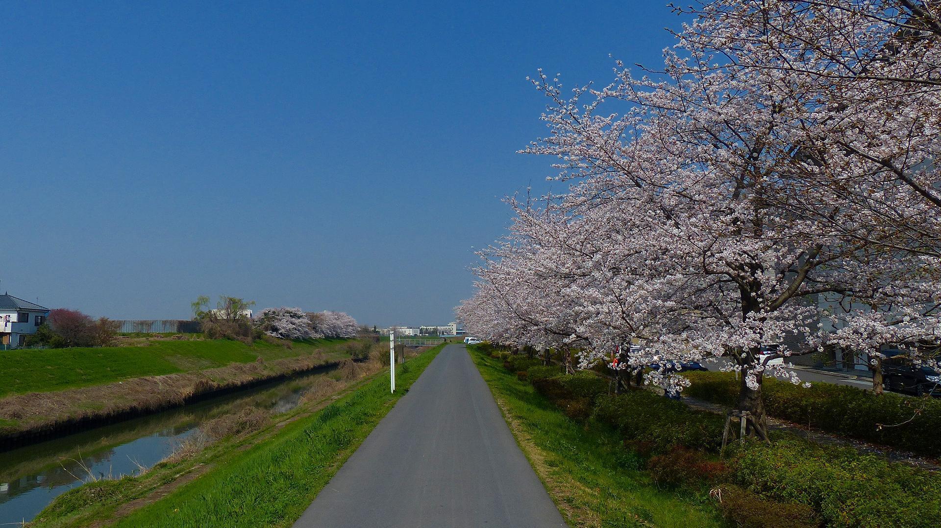 満開の桜を堪能! 【 2018 3/28(水) 】_a0185081_19273610.jpg