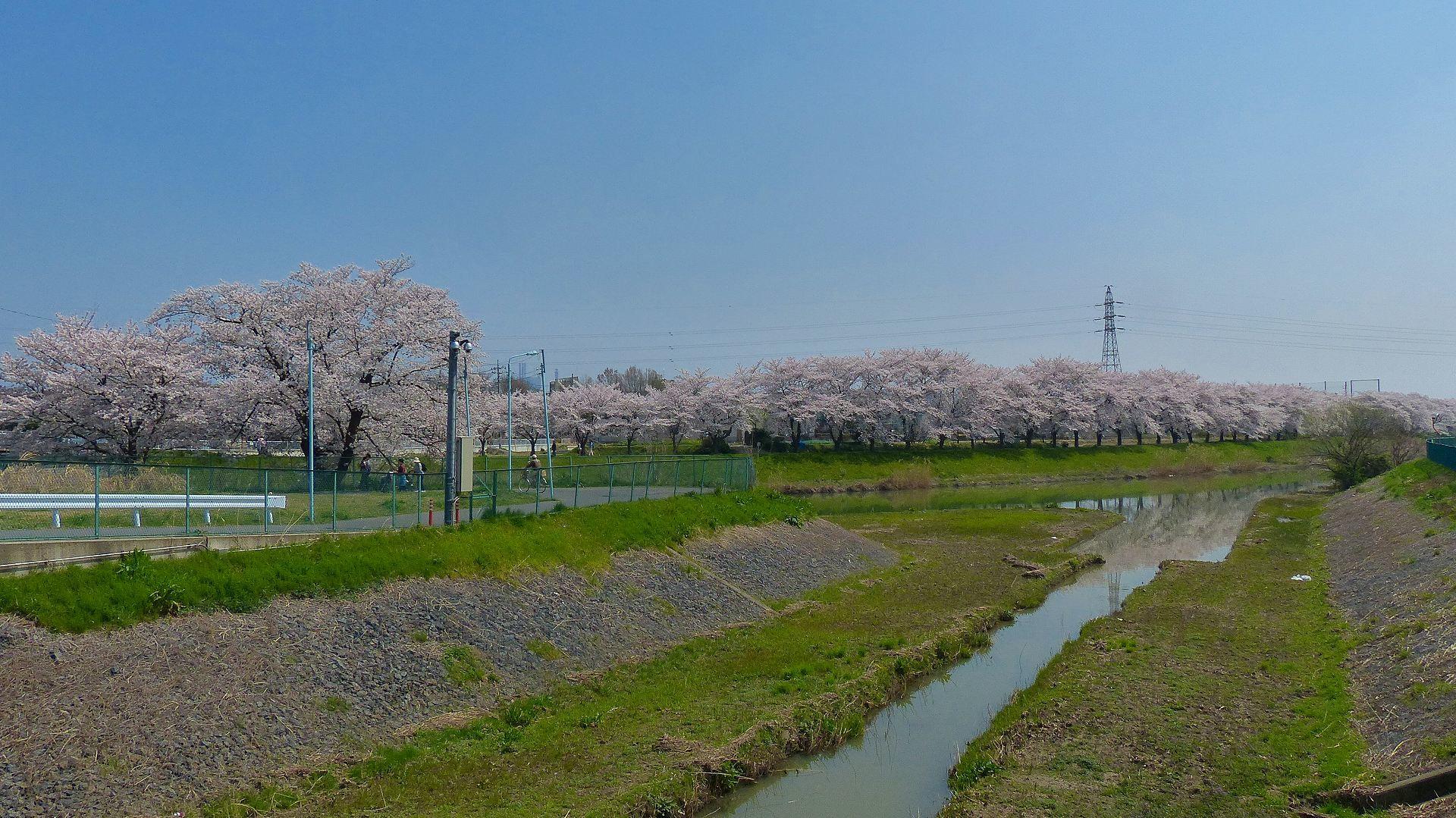 満開の桜を堪能! 【 2018 3/28(水) 】_a0185081_19295119.jpg