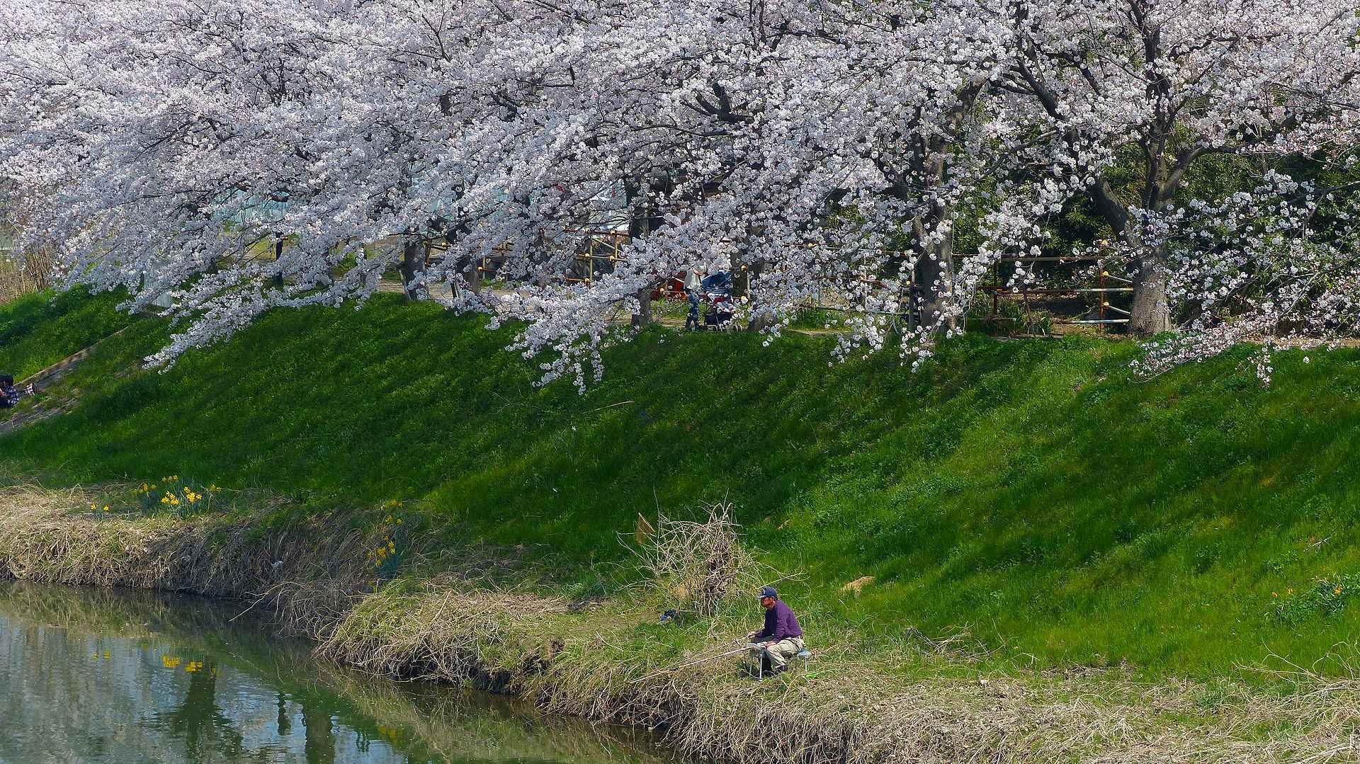 満開の桜を堪能! 【 2018 3/28(水) 】_a0185081_19300503.jpg