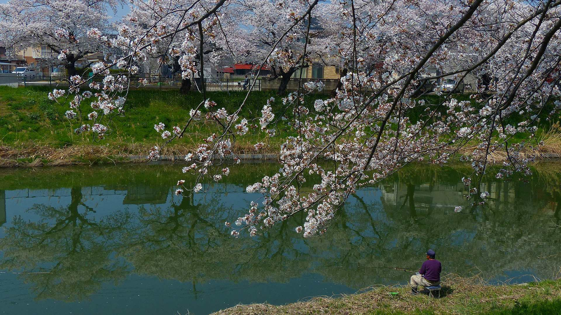 満開の桜を堪能! 【 2018 3/28(水) 】_a0185081_19302709.jpg