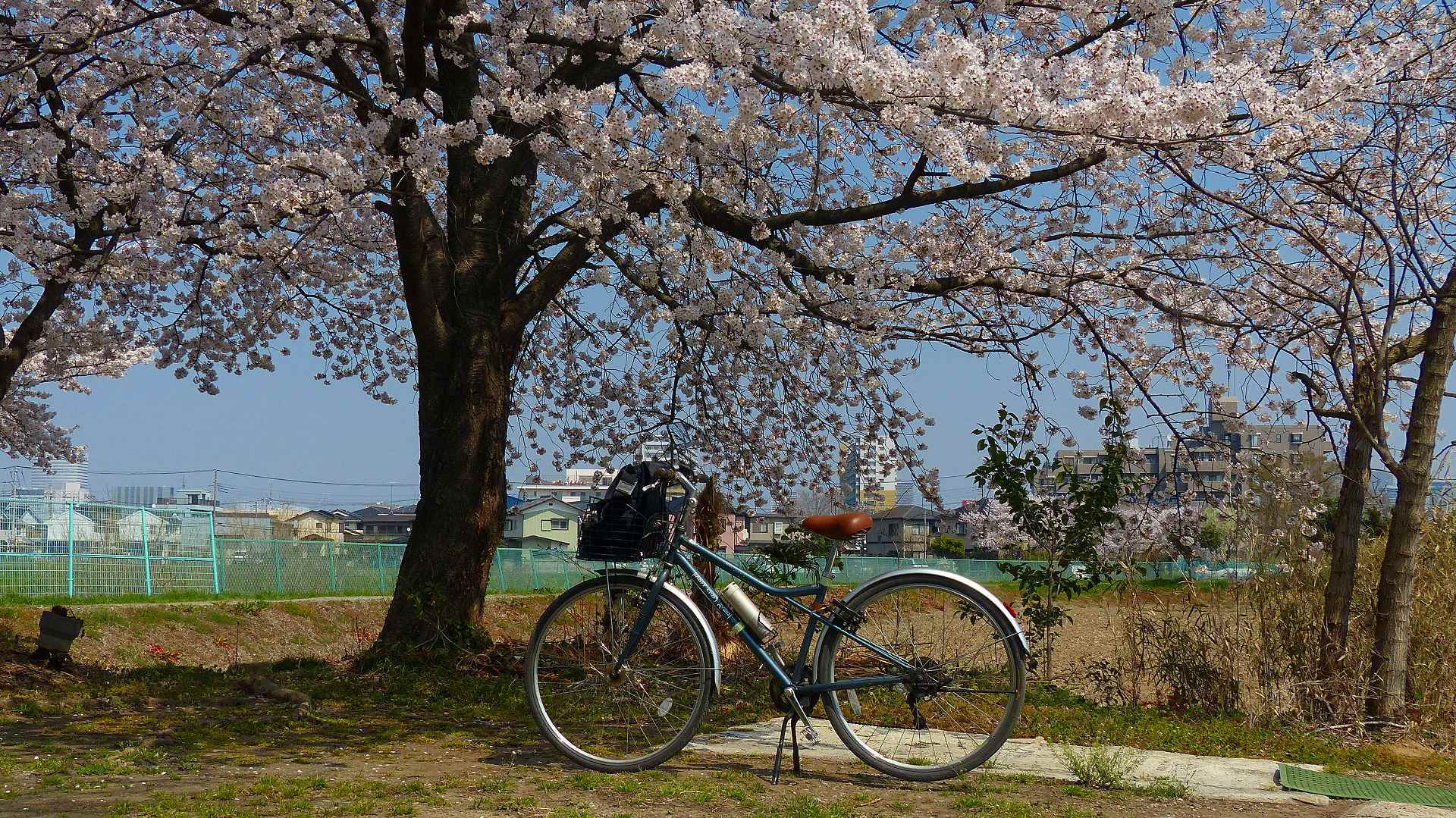 満開の桜を堪能! 【 2018 3/28(水) 】_a0185081_19305672.jpg
