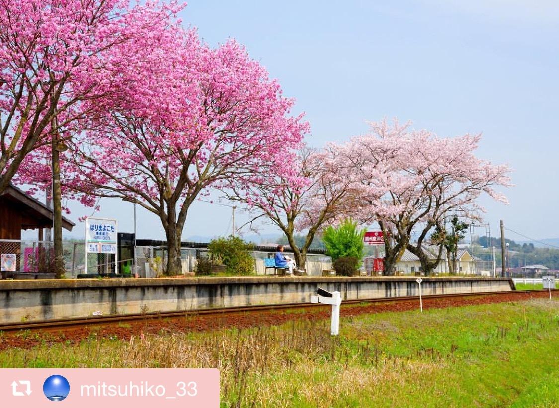 地元で讃岐うどん&桜をもとめて_f0378683_20313255.jpeg