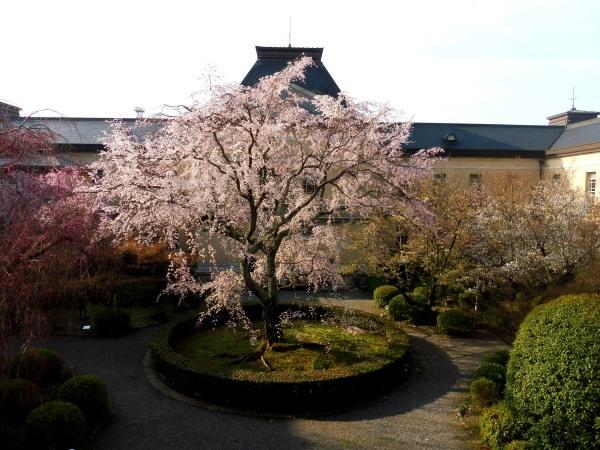 4月15日は京都モーリスホステル 1周年です_d0380390_13334929.jpg