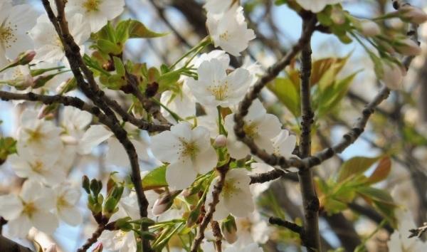 4月15日は京都モーリスホステル 1周年です_d0380390_13352347.jpg