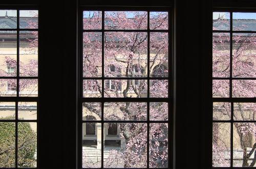 4月15日は京都モーリスホステル 1周年です_d0380390_13360149.jpg