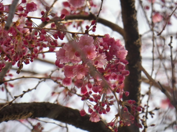 4月15日は京都モーリスホステル 1周年です_d0380390_13371219.jpg