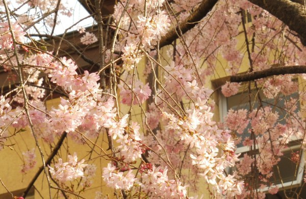 4月15日は京都モーリスホステル 1周年です_d0380390_13372800.jpg