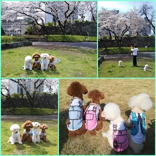 駿府公園でお花見_b0104592_16324649.jpg