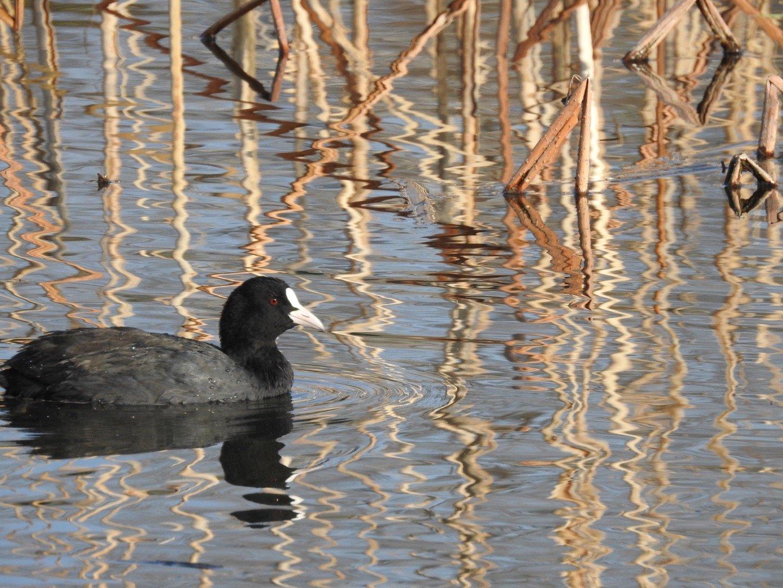 波志江沼の鳥さん_d0169692_23412959.jpg