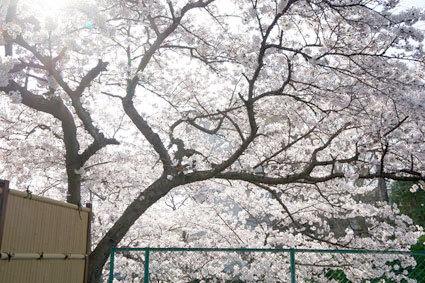 こんなに咲くのは初めてです_b0145296_22353749.jpg