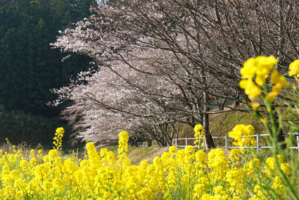こんなに咲くのは初めてです_b0145296_22354102.jpg
