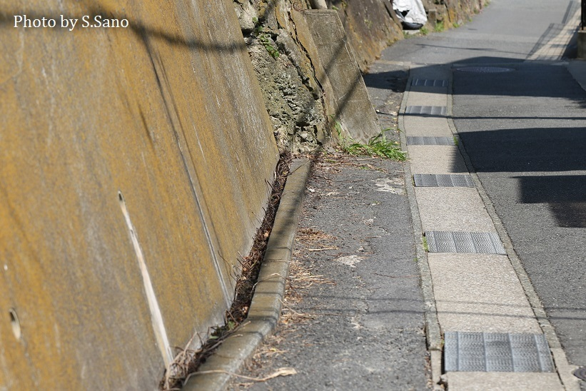 東京湾側の三浦半島、里山の跡を歩く_b0348205_17480367.jpg