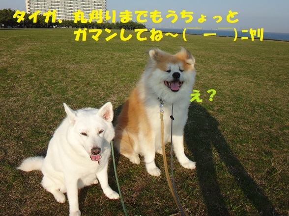 f0121712_08154143.jpg