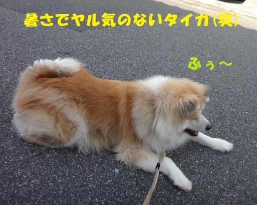 f0121712_14035963.jpg