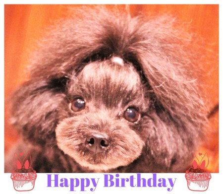 Happy Birthday ♡ クララちゃん_d0060413_12360122.jpg