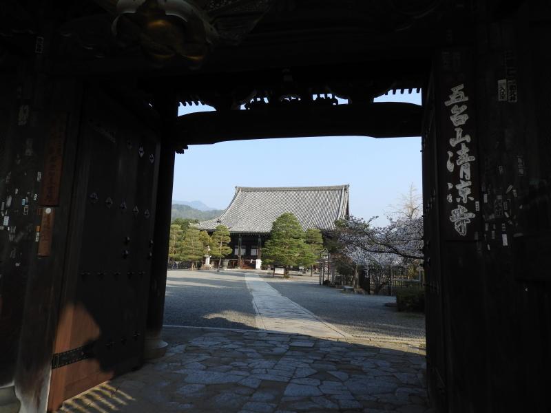 清涼寺と大覚寺でも満開_e0048413_21363879.jpg