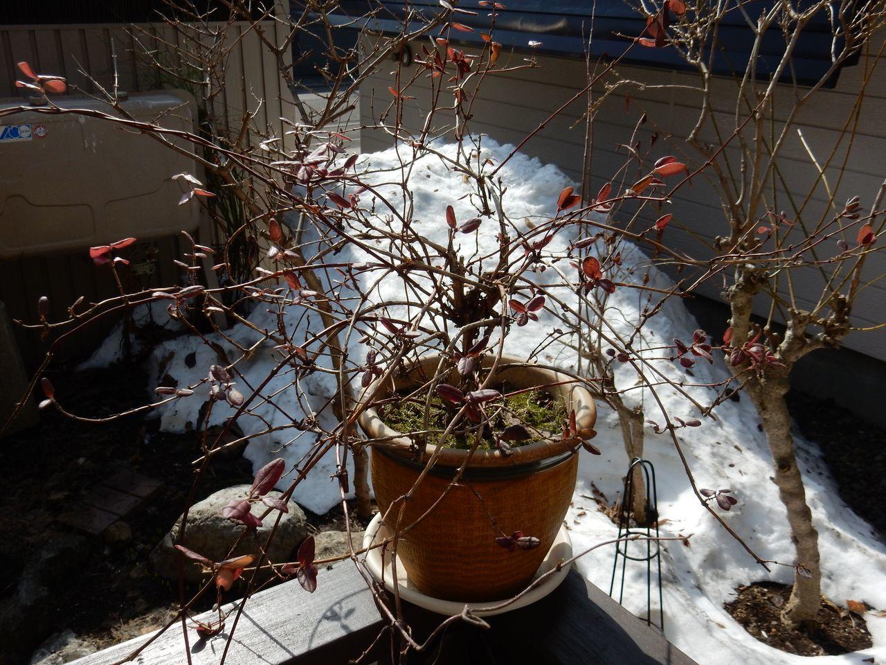 雪がなくなりました_c0025115_20514018.jpg