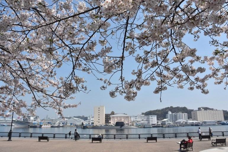 2018 ヴェルニー公園 桜 7_d0065116_20510345.jpg