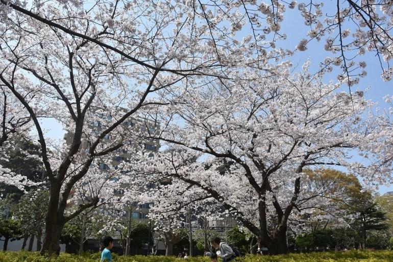 2018 ヴェルニー公園 桜 7_d0065116_20541089.jpg