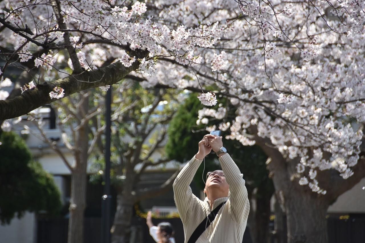 2018 ヴェルニー公園 桜 7_d0065116_20550814.jpg