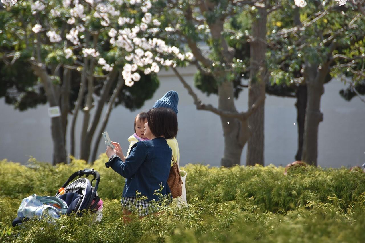 2018 ヴェルニー公園 桜 7_d0065116_20552956.jpg