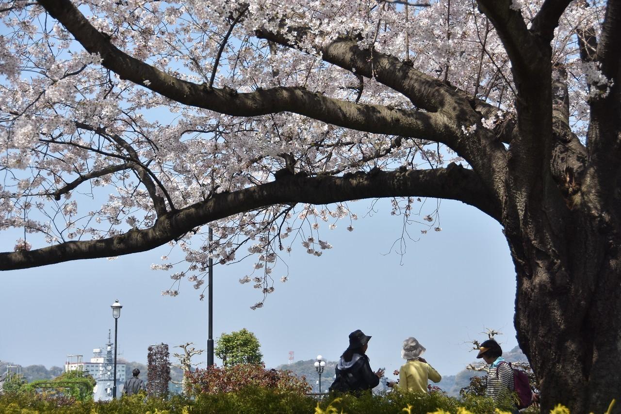 2018 ヴェルニー公園 桜 7_d0065116_20554658.jpg