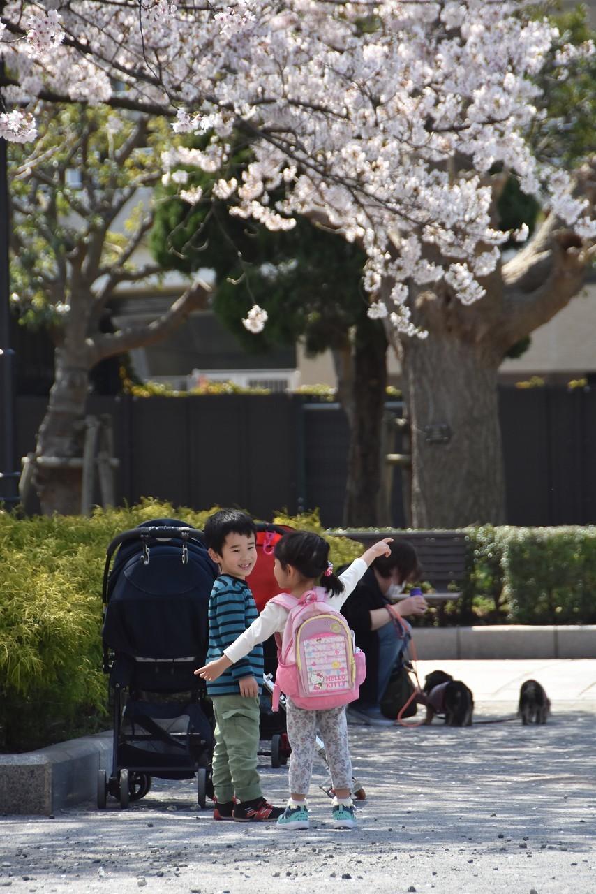 2018 ヴェルニー公園 桜 7_d0065116_20570951.jpg