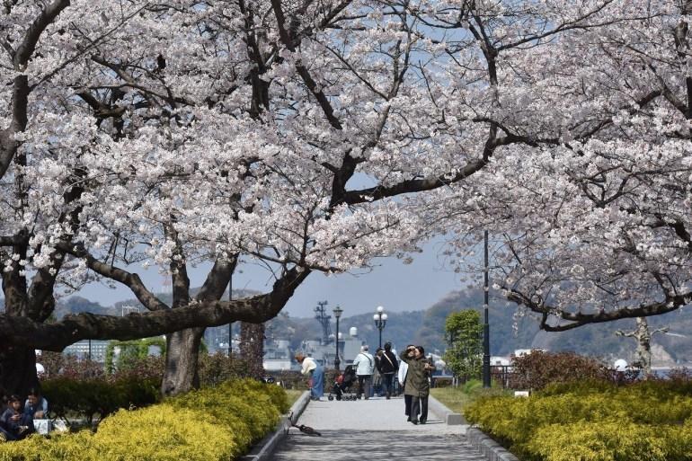 2018 ヴェルニー公園 桜 7_d0065116_20580671.jpg