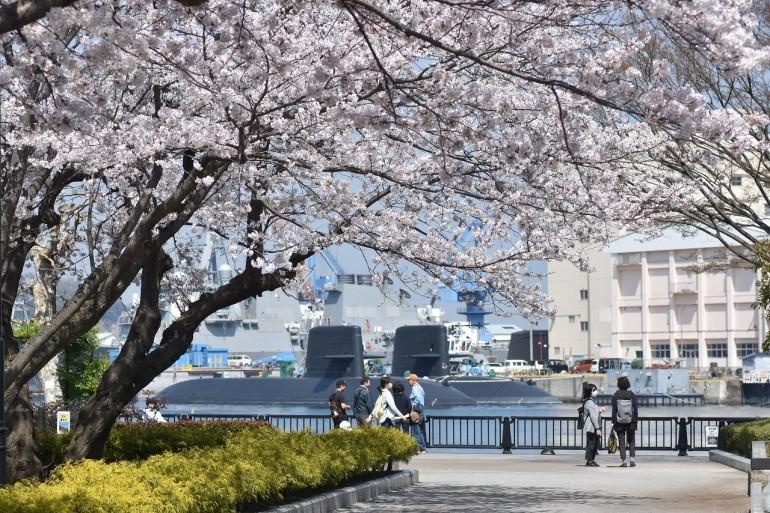 2018 ヴェルニー公園 桜 7_d0065116_20582880.jpg