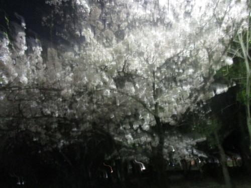 ユトリート教室 花見パーティ_e0175020_22224444.jpg