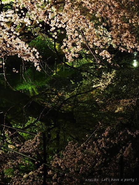 井の頭公園で桜のリフレクションを楽しみました♪_c0082921_08595732.jpg