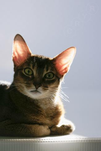 [猫的]日向ぼっこポイントですが・・・_e0090124_22313532.jpg