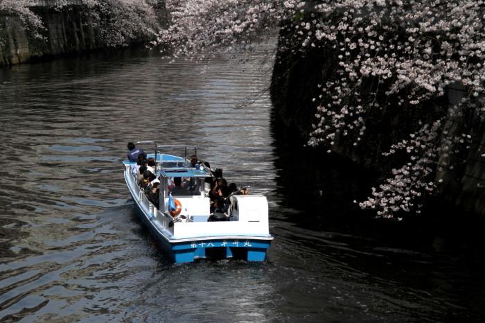 東京都目黒区 「大都会の桜 ー 人との係り」 ②_d0106628_10480623.jpg