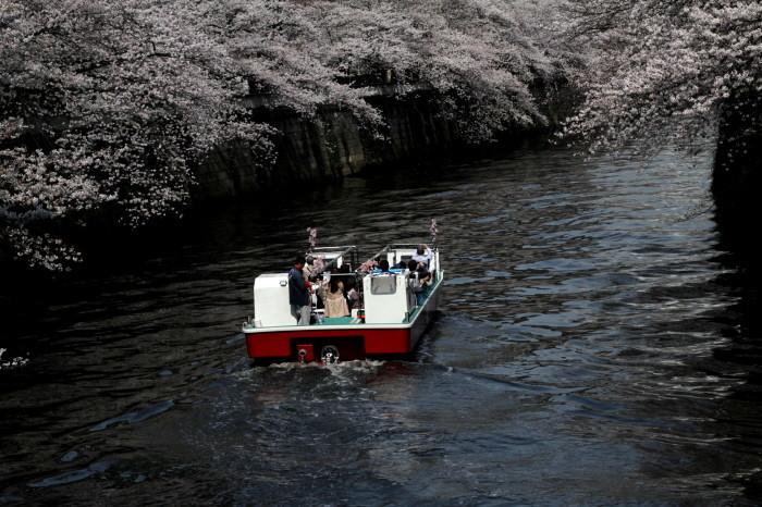 東京都目黒区 「大都会の桜 ー 人との係り」 ②_d0106628_10481692.jpg