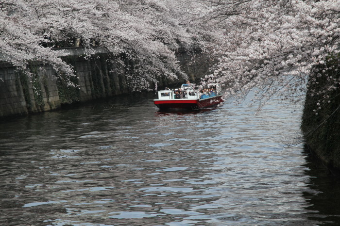 東京都目黒区 「大都会の桜 ー 人との係り」 ②_d0106628_10482967.jpg