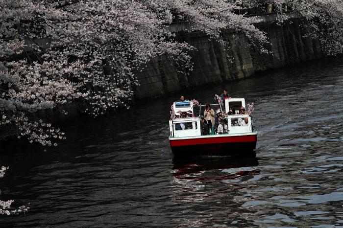 東京都目黒区 「大都会の桜 ー 人との係り」 ②_d0106628_10484917.jpg