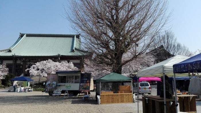 東別院さんは桜が満開でした_e0155231_07232644.jpg