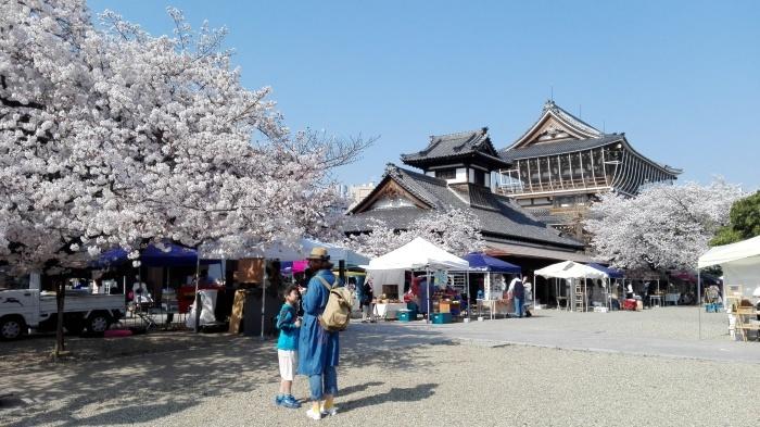 東別院さんは桜が満開でした_e0155231_07244617.jpg