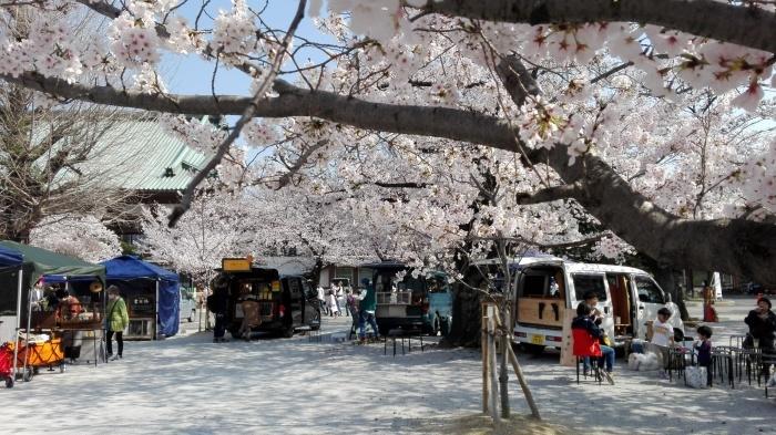 東別院さんは桜が満開でした_e0155231_07253913.jpg