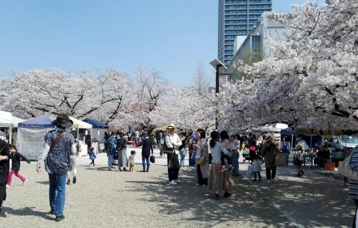 東別院さんは桜が満開でした_e0155231_07261285.jpg