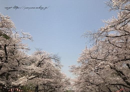 JRとくとく切符で都内へお出かけ巡り♪上野恩賜公園の桜&東京都美術館(AJC)_f0023333_23382846.jpg