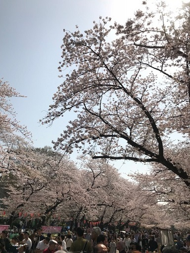 JRとくとく切符で都内へお出かけ巡り♪上野恩賜公園の桜&東京都美術館(AJC)_f0023333_23503140.jpg